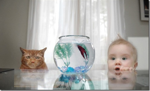 fish_boy_cat_different_perspectives